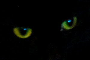 darkplay